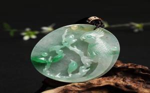 来认识一下,寓意英明神武的翡翠鹦鹉!